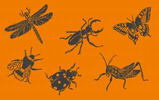British Insects Illustration