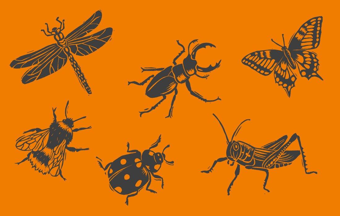 British Insects Illustration